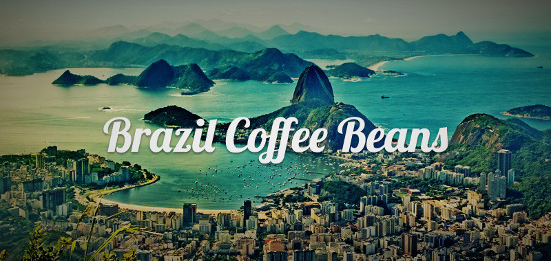 Brazil Coffee Beans Shop Article