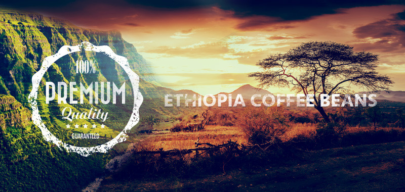 Ethiopia Coffee Beans Shop Article